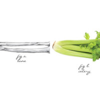 bones-celery